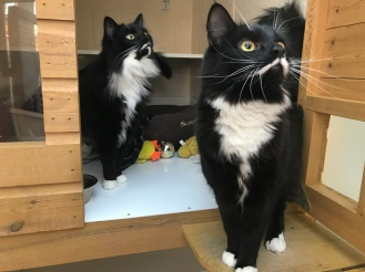 Toulouse and Squeak what stunning boys