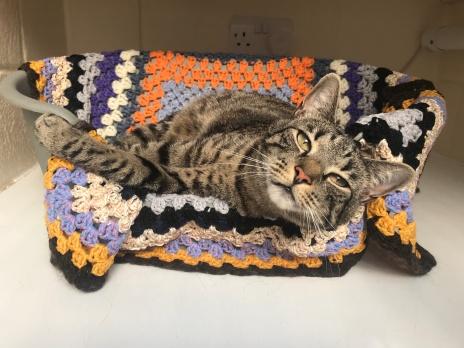 Judy loving her bed