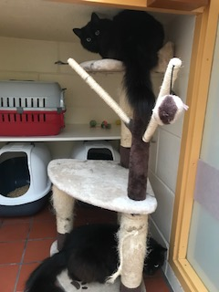 Nova and Luna on their cat tree